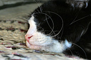 Witch Halloween Cat  Wicca Photos - Sleepytime by Michelle Milano