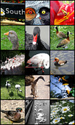 Collages Acrylic Prints - Slimbridge Wetlands Center by Roberto Alamino