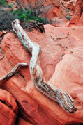 Navajo Nation Posters - Slot Canyon Driftwood Poster by Thomas R Fletcher