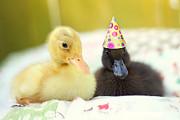 Ducklings Prints - Slumber Party Print by Amy Tyler