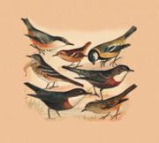 Birds - Small Birds by Eric Kempson