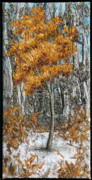 Clearing Tapestries - Textiles - Small Clearing 2 by Lorraine Roy