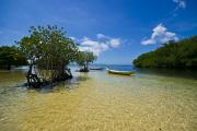 Mangrove Trees Photos - Small Colorful Boats Moored In A Tiny by Jason Edwards