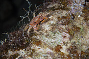 Crustacean Art - Small Crab Feeding At Night by Terry Moore