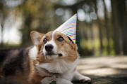 Party Hat Posters - Small Dog With Party Hat On Poster by Cavan Images