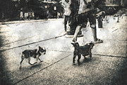 Chicago Digital Art Metal Prints - Small Dogs Walking Metal Print by Philip Sweeck