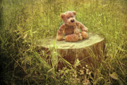 Teddybear Prints - Small little bears on old wooden stump  Print by Sandra Cunningham