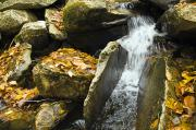 Autumn Views Prints - Small Waterfall In A Woodland Stream Print by James Forte