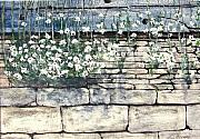 Stonewall Painting Metal Prints - Small White Flowers Metal Print by Terence John Cleary
