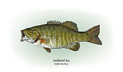 Game Drawings Posters - Smallmouth Bass Poster by Ralph Martens
