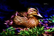 James Ahn Prints - Smile Juvenile Mallard - Fractal Print by James Ahn