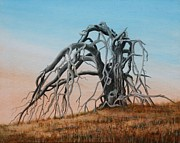 Decaying Originals - Smiley Canyon Tree by J W Kelly