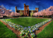 Cherry Blossoms Digital Art Metal Prints - Smithsonian Castle Garden Metal Print by Shelley Neff