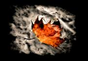 Fallen Leaf Photos - Smoke on the Water by Karen M Scovill