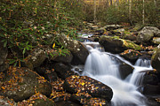 Autumn Woods Metal Prints - Smokies Stream in Autumn Metal Print by Andrew Soundarajan