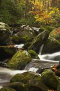 Autumn Woods Prints - Smokies Waterfall Print by Andrew Soundarajan
