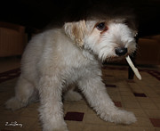 Awesome Originals - Smoking Lhasa apso Bingo by Zoh Beny