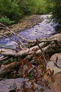 Gatlinburg Tennessee Prints - Smoky Mountain Stream Two Print by Robert Harmon