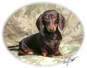 Dachshund Puppy Digital Art Posters - Smooth Dachshund Doxie pup Poster by Maxine Bochnia