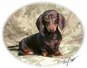 Smooth Dachshund Doxie Pup Print by Maxine Bochnia