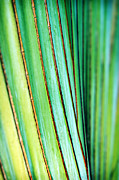 Fan Framed Prints - Smooth Tropical Palm Framed Print by Marilyn Hunt