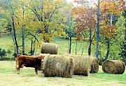 Tennessee Hay Bales Metal Prints - Smorgasbord Metal Print by Jan Amiss Photography