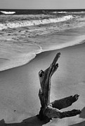 Framed Beach Print Photos - Snag And Surf by Steven Ainsworth
