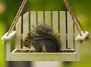 Birdseed Art - Snaggletooth Squirrel on Feeder by Bill Tiepelman