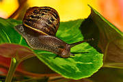 Helix Framed Prints - Snail in Colorful Habitat Framed Print by Kaye Menner