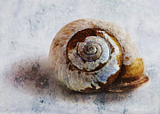 Shell Texture Prints - Snail Shell Print by Ron Jones