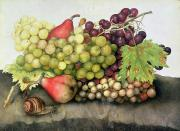 Vine Grapes Painting Posters - Snail with Grapes and Pears Poster by Giovanna Garzoni