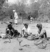 Dangerous Talent Prints - Snake Charmers in Delhi - India - c 1903 Print by International  Images