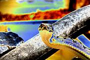Reptiles Digital Art Metal Prints - Snake Eyes Metal Print by Peter  McIntosh