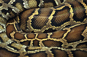 Extreme Close Up Framed Prints - Snake Framed Print by John Foxx