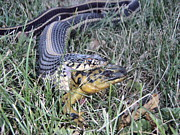 Preditor Photos - Snake with Legs by Melissa Peterson
