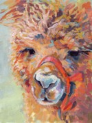 Alpaca Framed Prints - Snickers Framed Print by Kimberly Santini