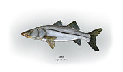 Angling Art - Snook by Ralph Martens