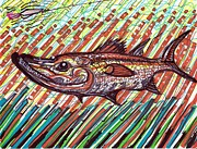 Surf Fishing Drawings Prints - Snookey Print by Robert Wolverton Jr