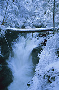 Snow Scenes Metal Prints - Snow And Ice Cover A Log Metal Print by Stephen Alvarez