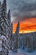 Bulgaria Metal Prints - Snow and Sunrise Metal Print by Evgeni Dinev