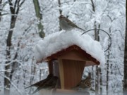 Impressionism Photos - Snow Birds by David Ackerson