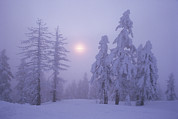 Winter Trees Photos - Snow Blankets Trees On Diamond Peak by Phil Schermeister