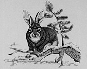 Snow Scene Drawings Prints - Snow Bunny Print by Retouch The Past