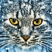 Wendy White Acrylic Prints - Snow Cat Acrylic Print by Wendy White
