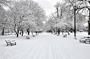 Blizzard New York Framed Prints - Snow Covered Benches And Trees In Washington Park Framed Print by Shobeir Ansari