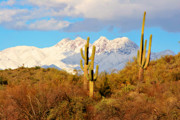 Giclee Cactus Framed Prints - Snow Covered Four Peaks Framed Print by James Bo Insogna