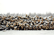 Lumber Prints - Snow covered log pile Print by Richard Thomas