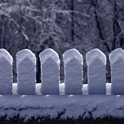 Snow Covered Fence Framed Prints - Snow-Covered Picket Fence in Winter Framed Print by Will & Deni McIntyre