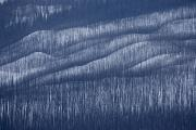 Wildfires Framed Prints - Snow-covered Slopes And Blackened Tree Framed Print by Michael Melford