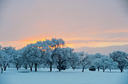 Albuquerque New Mexico Posters - Snow Covered Trees At Sunset Poster by Nancy Newell